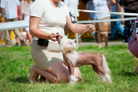 Participants compete in dog show  photo