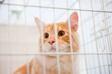 animal shelter: Red cat in a cage behind bars Stock Photo