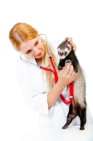 Female vet examines a patient ferret isolated photo