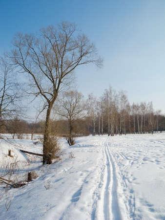 Birch forest in winter season in Ukraine photo