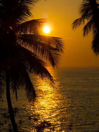 Beautiful tropical sunset, palm trees at foreground photo