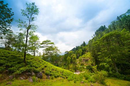 Mountain landscape with tea plantations in Nuwara Eliya, Sri-lanka photo