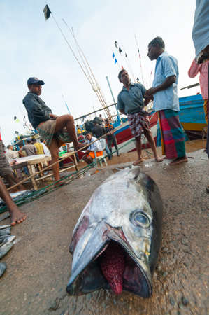 MIRISSA BAY, SRI LANKA - APRIL 10: Fishermen sell fresh tuna fish at the market in Mirissa Bay, Sri Lanka on April 10, 2012. Seafood is one of the main source of food for local people. Stock Photo - 13626998