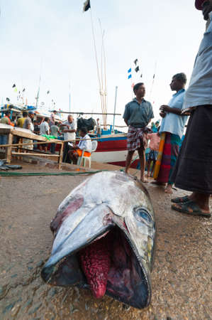 MIRISSA BAY, SRI LANKA - APRIL 10: Fishermen sell fresh tuna fish at the market in Mirissa Bay, Sri Lanka on April 10, 2012. Seafood is one of the main source of food for local people.