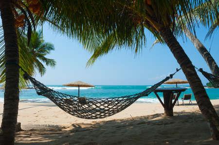 스리랑카에서 열 대 해변 야자수 나무 사이 해먹