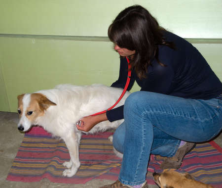 Veterinarian inspects a sick stray dog at the shelter Stock Photo - 14001880