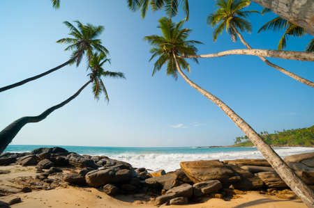 Untouched tropical beach in Sri Lanka Stock Photo - 14155688