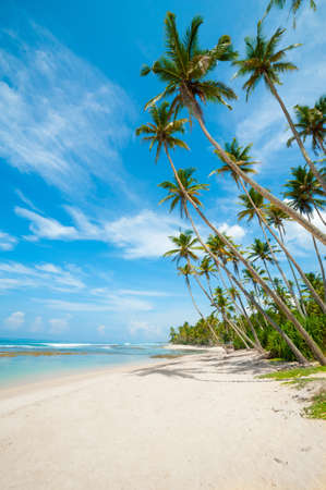 paradise bay: Untouched tropical beach in Sri Lanka