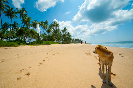Tropical beach in Sri Lanka. Dog at foreground looks to a couple walking