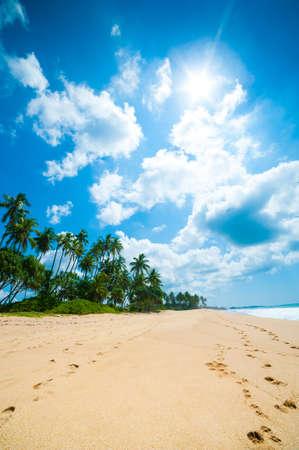 Tropical beach in Sri Lanka Stock Photo - 14155698