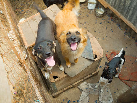 Stray dogs in the shelter photo