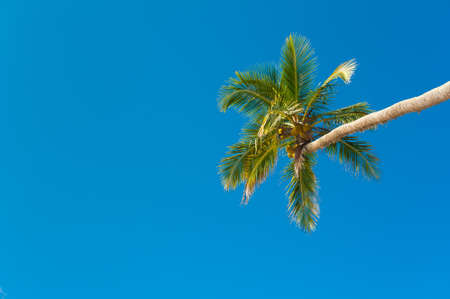 Coconut palm against blue sky photo