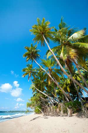 Untouched tropical beach in Sri Lanka Stock Photo - 14747669