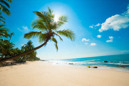 island paradise: Untouched tropical beach in Sri Lanka
