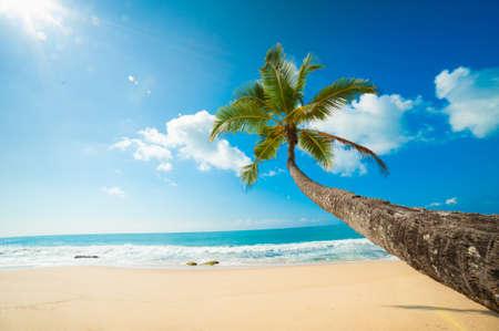 Untouched tropical beach in Sri Lanka Stock Photo - 14747661