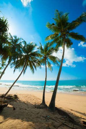 Untouched tropical beach in Sri Lanka Stock Photo - 14747664
