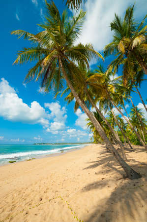 Untouched tropical beach in Sri Lanka Stock Photo - 14747668