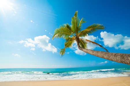 Untouched tropical beach in Sri Lanka Stock Photo - 14813464