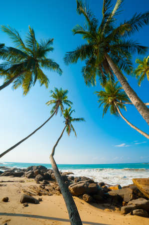 Untouched tropical beach in Sri Lanka Stock Photo - 14920593