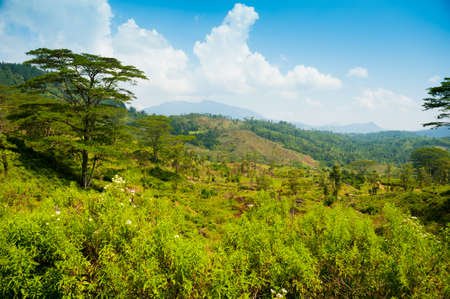 Tea plantation landscape in Sri Lanka Stock Photo - 14920613