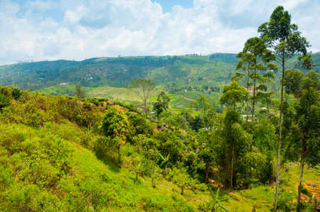 Tea plantation landscape in Sri Lanka Stock Photo - 14920586