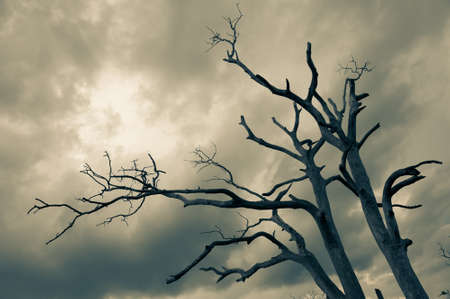 Silhouette of bare tree with cloudy sky photo