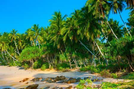 Beautiful palm forest on a coastline in Sri Lanka Stockfoto