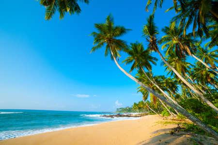 スリランカの手付かずの熱帯のビーチ 写真素材 - 15053670