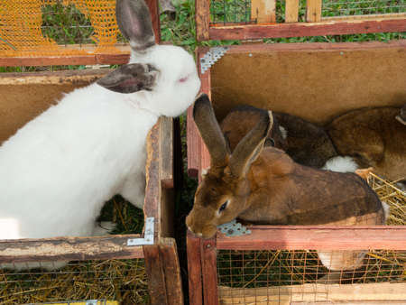 Rabbits n the cage photo