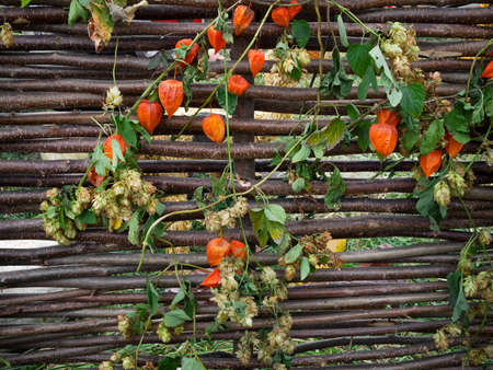 wattle: Traditional Ukrainian wattle with Physalis and hop Stock Photo