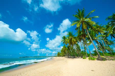 スリランカの手付かずの熱帯のビーチ 写真素材 - 16645870