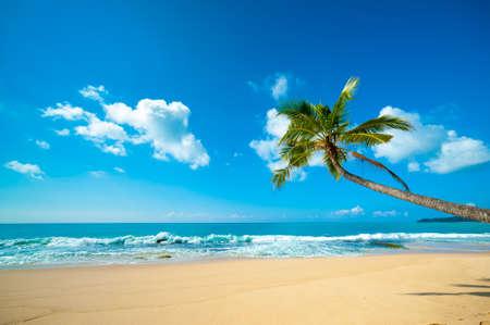 Untouched tropical beach in Sri Lanka