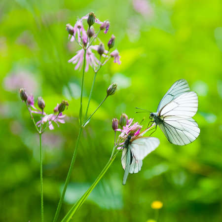 Two butterflies sitting on a flower photo