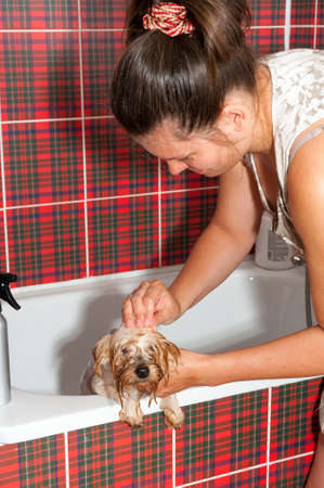 Female groomer wash Yorkshire Terrier Stock Photo - 20927376