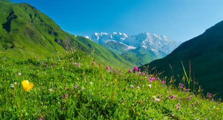 ushguli: Beautiful meadow landscape near Ushguli, Svaneti, Georgia. Shkhara mountain in the background
