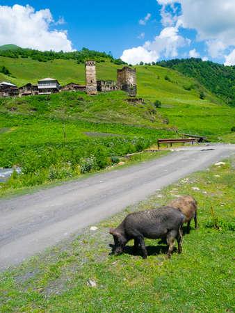 swanetia: Country landscape in Davberi, Samegrelo-Zemo Svaneti, Georgia