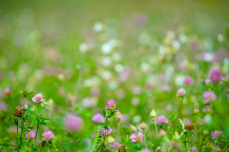 Summer meadow with various herbs, shallow depth of field photo