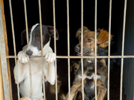 Stray dogs in the shelter Banco de Imagens