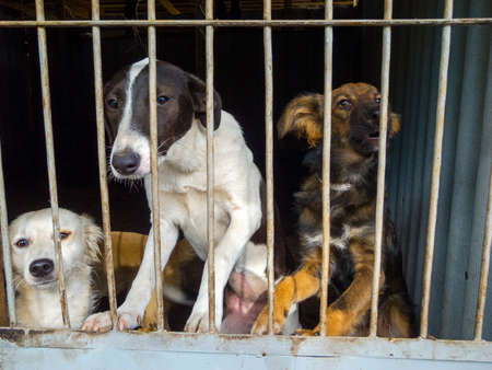 Stray dogs in the shelter Stock Photo