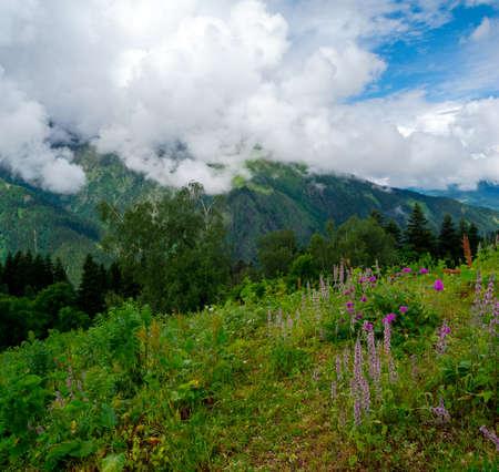 svan: Paesaggio di montagna con i fiori in primo piano in Svaneti, Georgia Archivio Fotografico