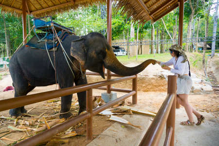 Young woman feeding elephant by bananas Stock Photo - 28064297