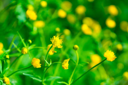 Small yellow flowers in the grass stock photo picture and royalty small yellow flowers in the grass stock photo 29125393 mightylinksfo