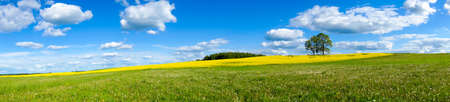 panoramic sky: Beautiful summer panoramic landscape of meadows with trees. Lithuania