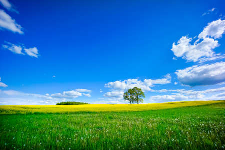 Beautiful summer landscape of meadows with trees. Lithuania Stock Photo