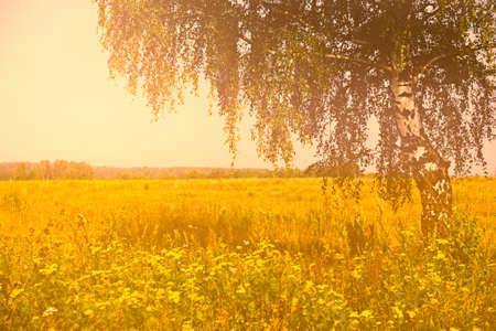 colores calidos: paisaje rural del verano con el abedul en el prado. Colores c�lidos