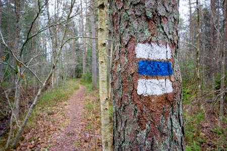 footpath: Route hiking mark on a tree trunk