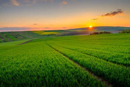 Green field at beautiful sunset at Soth Moravia, Czech Republic
