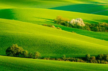 moravia: Green wavy hills in South Moravia, Csezh Republic