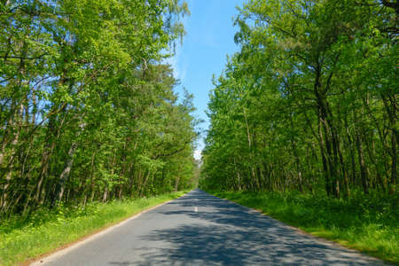 split road: Road in a wood at summer time, Curonian Split Stock Photo