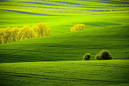 moravia: Trees on green wavy hills in South Moravia, Csezh Republic